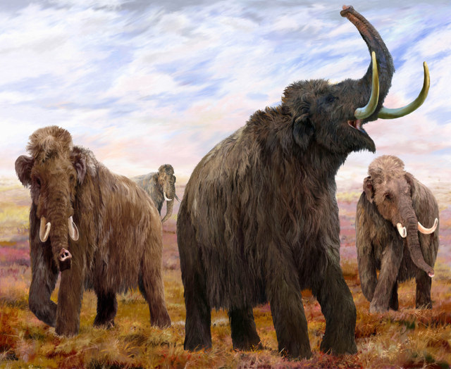 Mammoths: Ice Age Giants At Natural History Museum