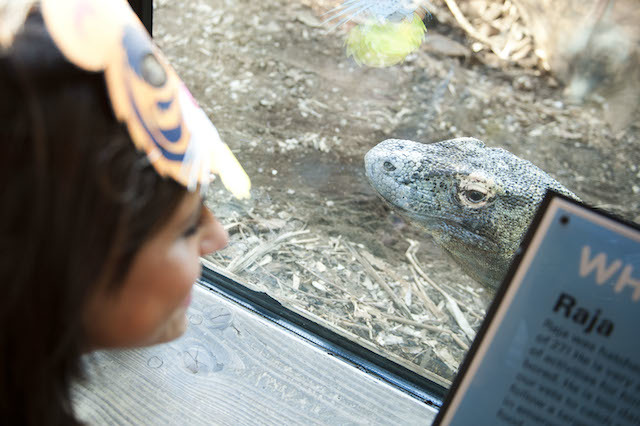 Get up close to the animals