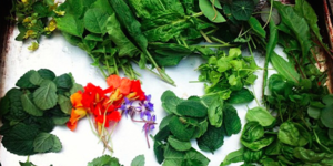 Vegetarian London: The Dairy Restaurant Review