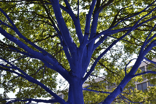 Have you ever seen the blue trees by St Paul's? A former art project. Photo by psyxjaw