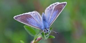 Join In The Big Butterfly Count
