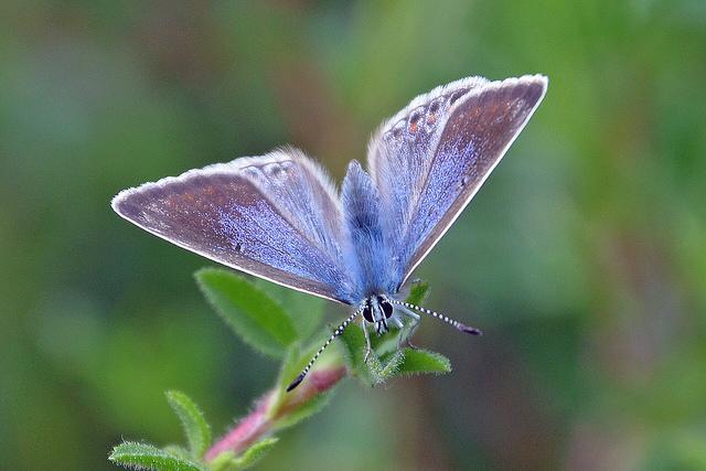 butterfly_180714