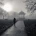 Fog over Clapham Common by Torsten Reimer