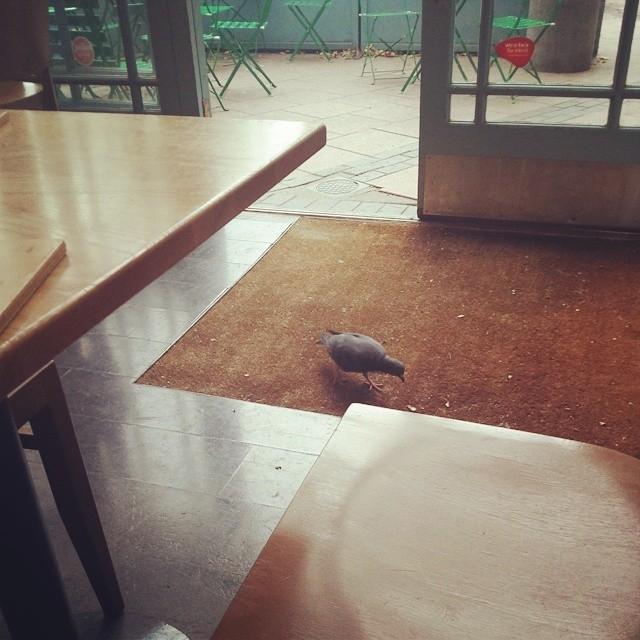 London Short Fiction: Vegan Pigeon Eater
