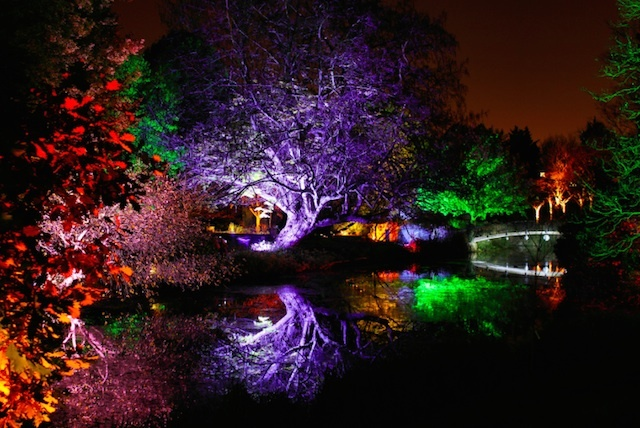 Enchant The Whole Family At Syon Park's Woodland Walk