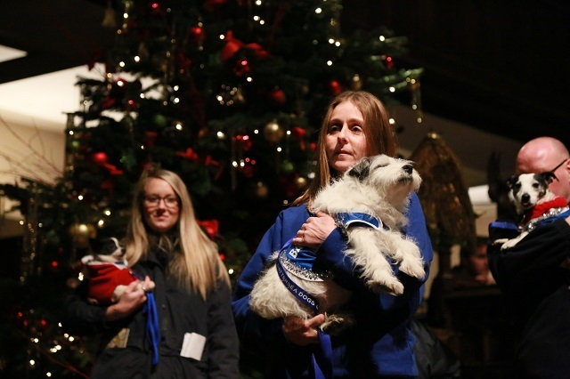 We Woof You A Merry Christmas — Battersea Dogs Home Carol Concert Raises £17,000