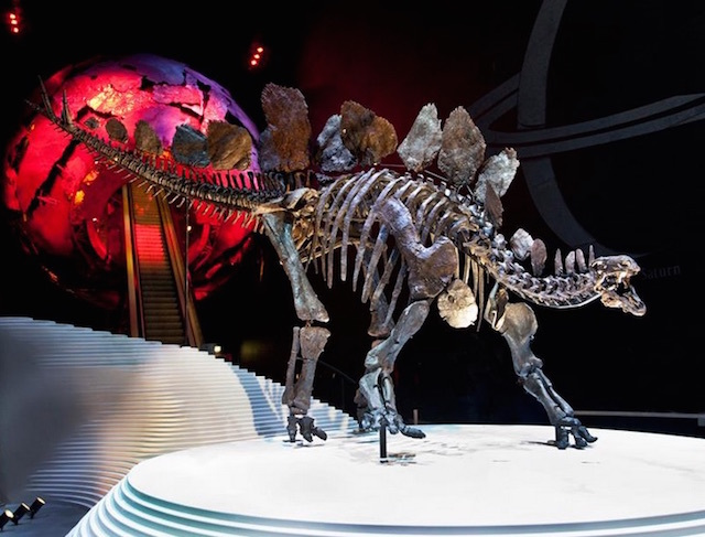 World's Most Complete Stegosaurus Skeleton Unveiled In London