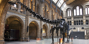 9 Reasons Why Dippy The Diplodocus Must Go