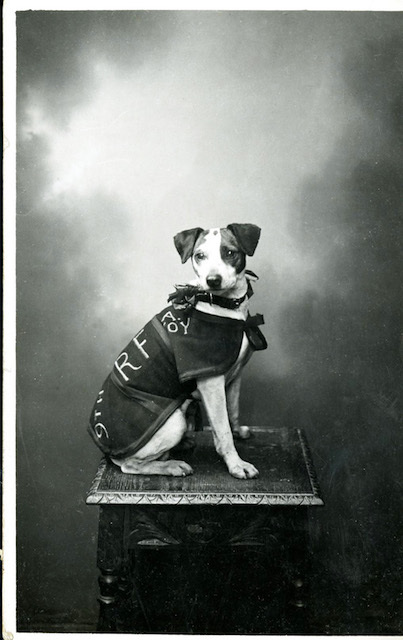 Discover The Dogs Of WWI At Bishopsgate Institute