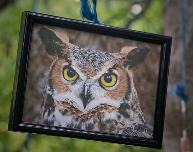London Is Getting An Owl Bar, What A Hoot