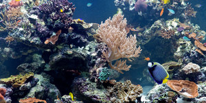 Natural History Museum's Coral Reef Exhibition Lacks Depth