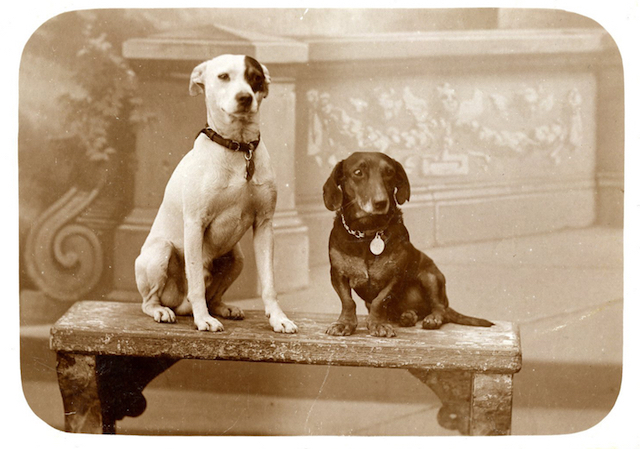 Discover The Hidden History Of Dogs In The First World War