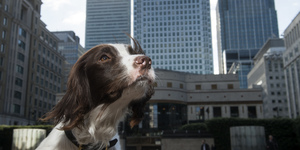 The Sniffer Dogs Of London