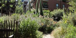 London's Little Gardens: Phoenix Garden