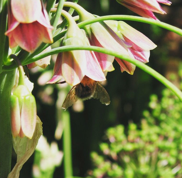 Green Teasers: The Best Open Garden Squares On Instagram