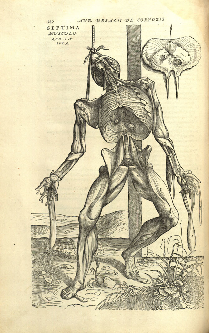 Drawing Death: The Age-Old Relationship Between Anatomy And Art