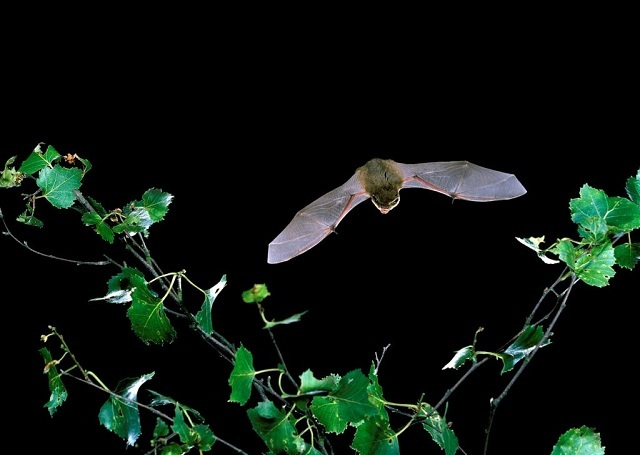 Bats And Bishops: Making Friends With Bats In London