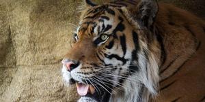 London News Roundup: 200 Streakers Run Through London Zoo