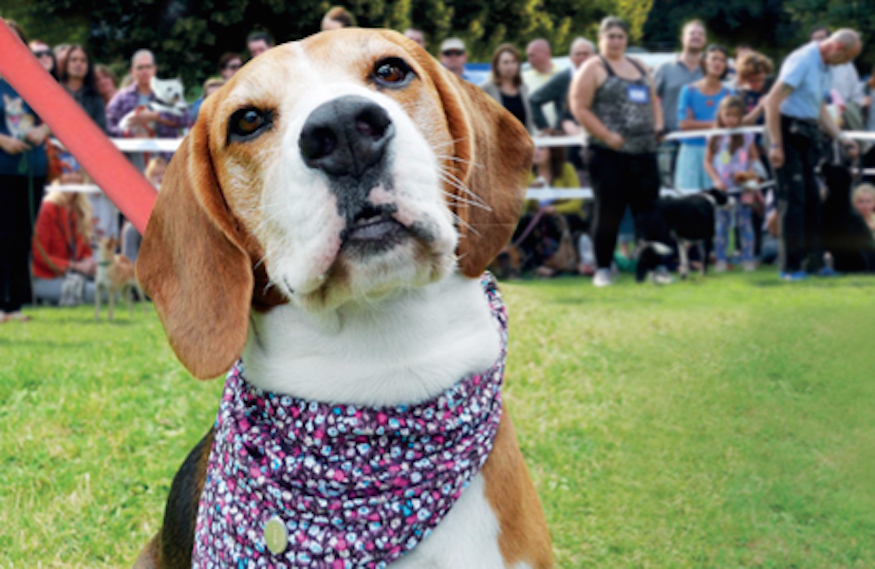 Tails Will Wag At Battersea Annual Reunion
