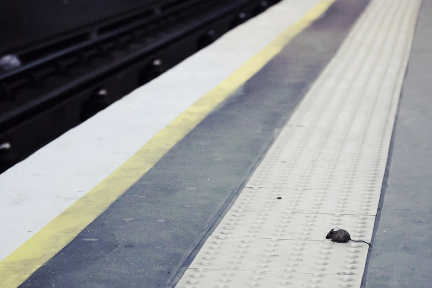 Night Tube: What Will Happen To The London Underground Mice?