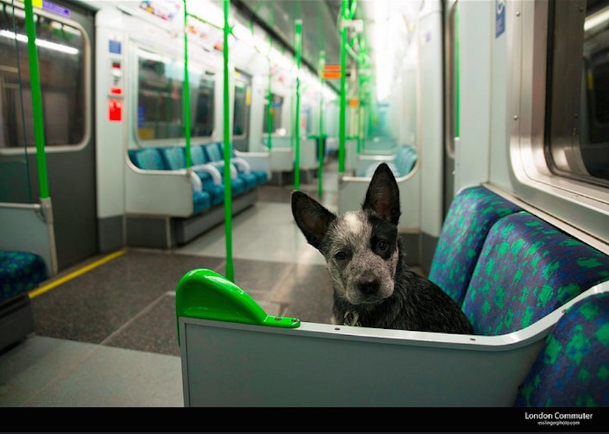 Can You Take An Alpaca On The Tube?
