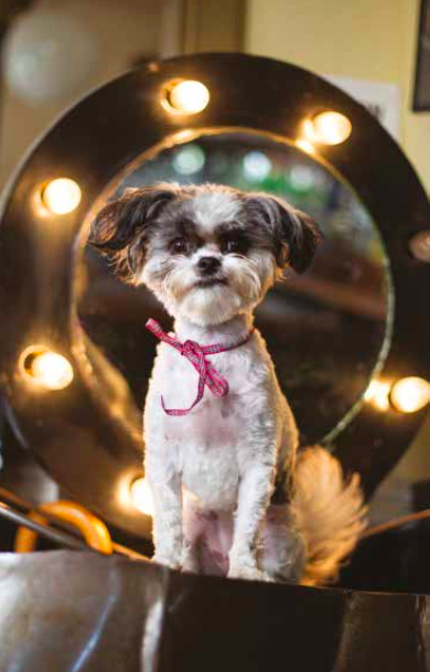 Meet The Pub Dogs Of London