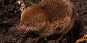 Have You Ever Seen A Vole Or Shrew In London?