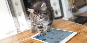 6 Top Tablets To Buy For Christmas 2015
