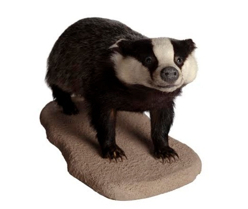 Interview With A Stuffed Badger