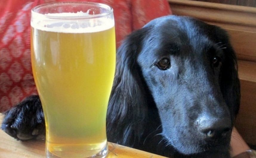 London Pubs To Take Your Dog To