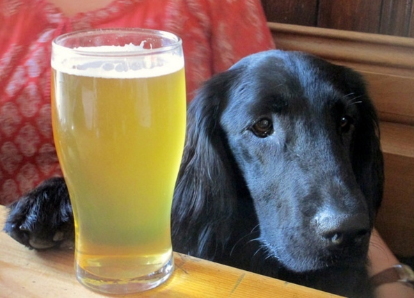 The Best Dog-Friendly Pubs In London