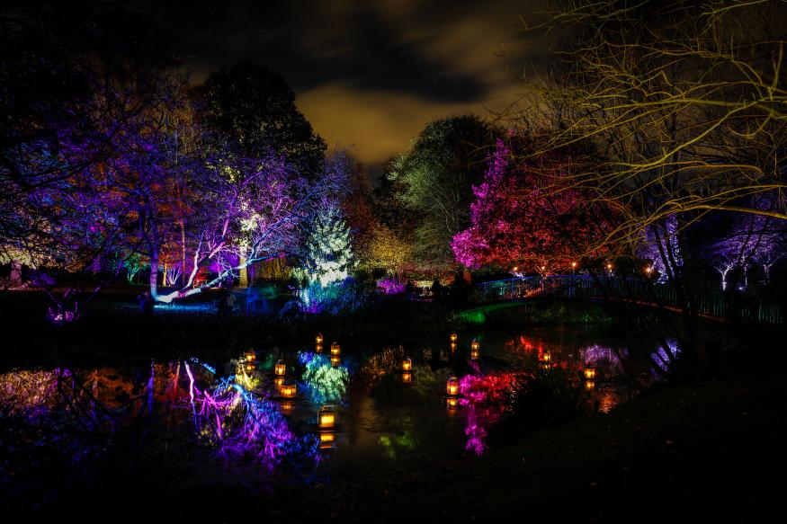 Image result for enchanted woodland