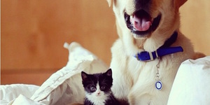 London Animal Shelters To Follow On Instagram