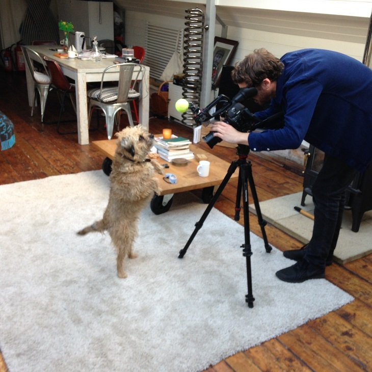 Watch Brand New Dog-umentaries About London's Top Canines