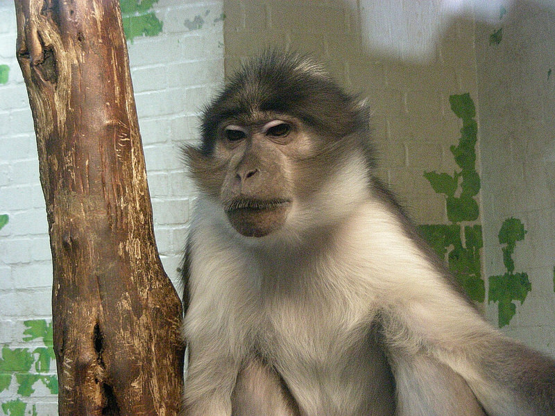 Monkeys In London: Everything You Need To Know