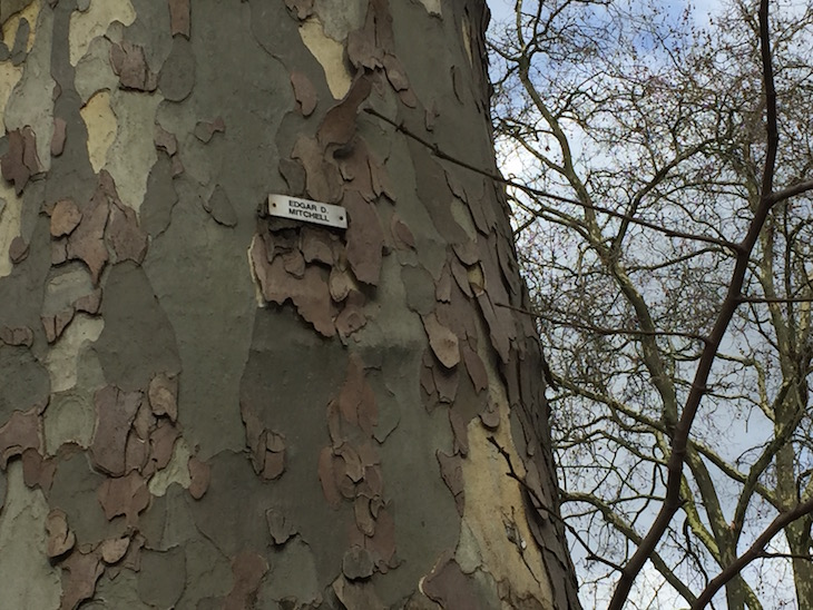 Neil Armstrong Discovered Up A Tree In Kennington