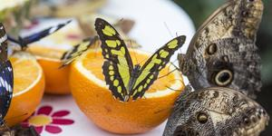 Get Up Close With Butterflies At Natural History Museum