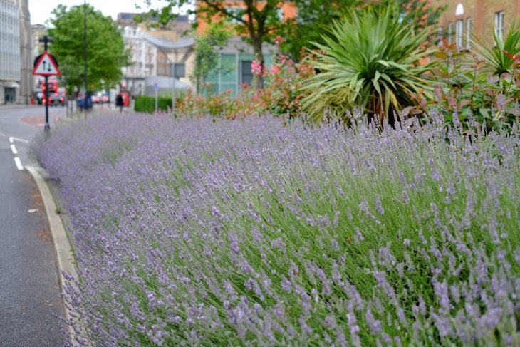Guerrilla Gardening In London: A Battle Against Concrete Paving And Private Development