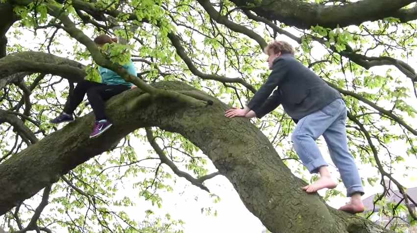Video: See London From The Treetops