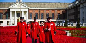 See Stunning Display Of 300,000 Knitted Poppies