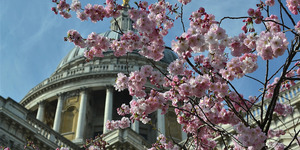 London Tree Week Returns With Loads Of Fun Things To Do