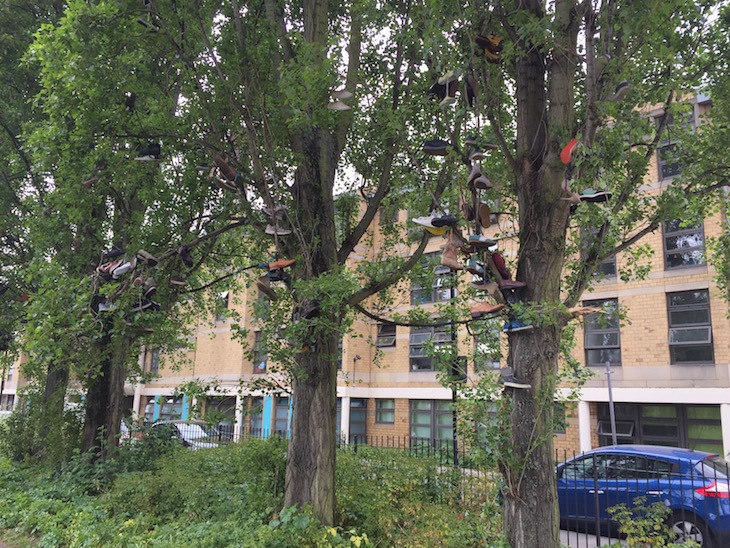 Brick Lane's Show Trees: An Arboreal Mystery