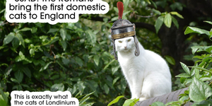 A Complete History Of London In Cats