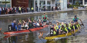 Ducks And Dragons Released Into Paddington Canal