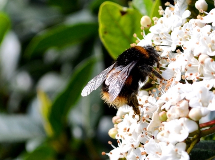 Track London's Urban Bees This Summer