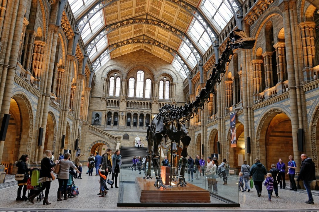 Where Is Dippy The Dinosaur Now?