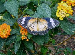 butterfly270510.jpg