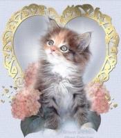 fluffy_kitten.jpg