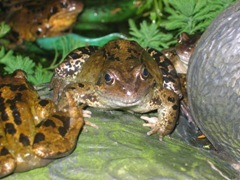 New Frog Centre For London Zoo