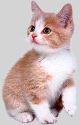 This Week's Kitten News